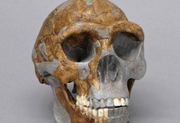 Ape e le prime antico popolo