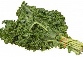 Kale. crescere cavolo