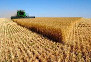 Censo de Agricultura: los años de la orden. Ministerio de Agricultura