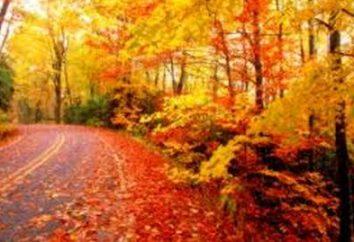 Albero di foglie in estate e autunno