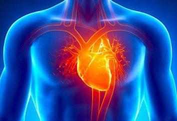 Camere del cuore umano: descrizione, struttura, funzioni e tipi
