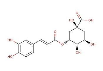 kwasu chlorogenowego. Cechy i właściwości biochemiczne