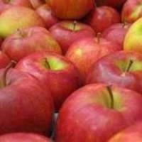 Est-il possible de geler les pommes pour l'hiver, donc ils étaient savoureux et conservé vitamines