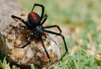 Et vous savez ce rêve grosse araignée noire?