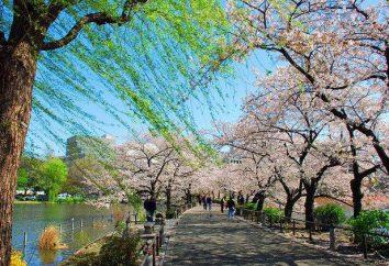 Ueno Park, Tokyo: wie ein Foto zu bekommen, Beschreibung