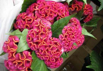 capesante Fiori – un letto di decorazione floreale luminoso