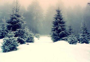 """Ensayo sobre """"La vista desde la ventana en invierno"""": un ensayo en el estilo de paisaje"""
