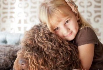 Perro de aguas (perro de agua francés): Las características externas, la educación del carácter