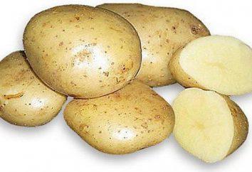 Ziemniaki Karatop: Charakterystyka uprawy