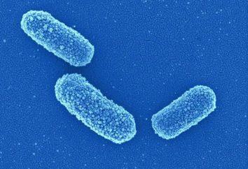 Klebsiella w moczu: leczenie choroby