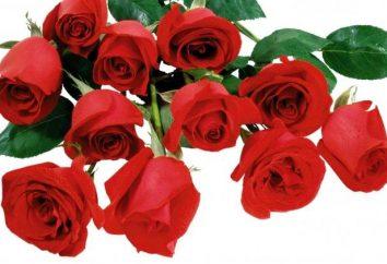 Czerwone róże – kwiaty królowe