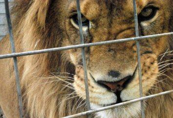 Jakie zwierzę siedzi w klatce? Uczymy!