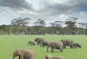 caractéristiques économiques et géographiques générales de l'Afrique. Caractéristiques des zones naturelles en Afrique