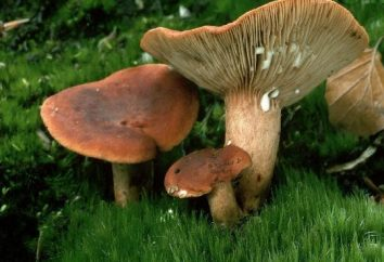 Funghi commestibili: funghi falsi