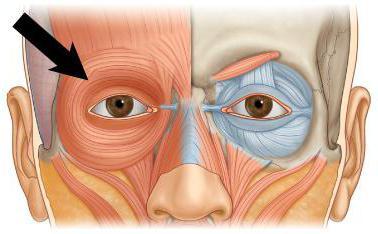 Znalezione obrazy dla zapytania mm okrezne oka