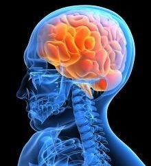 Quali sono membrane cerebrali