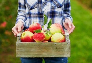 spremiagrumi professionale per le mele – una descrizione, caratteristiche e recensioni