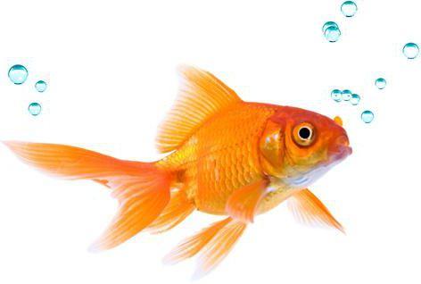 Klassifizierung von Fisch: die Grundlage der Taxonomie und Beispiele