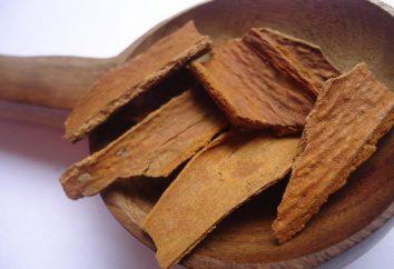 Cynamon i miód – dobro czy zło. Korzystanie z miodem i cynamonem