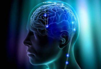 """""""Vikium"""": avis. Le développement de la pensée, la mémoire, l'attention"""