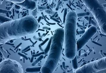 Jak E. coli od osoby?