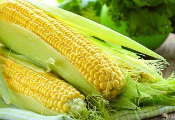 Mogę jeść surową kukurydzę? Zastosowanie kukurydzy mokrej