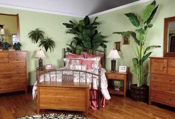 Farben für das Schlafzimmer. Welche Art von Blumen sind geeignet für das Schlafzimmer