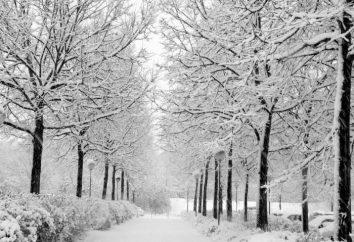 Czy zima rośnie: Charakterystyka rozwoju roślin