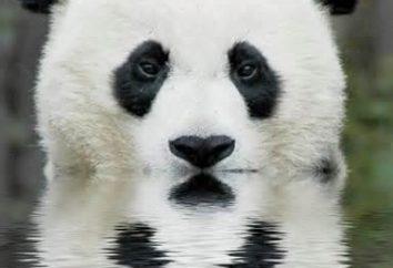 Czy wiesz, gdzie życie Panda?