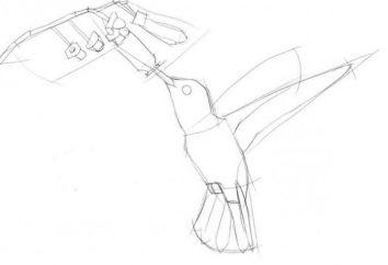 Jak narysować koliber szybkie i łatwe