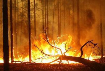 Incendi in Territorio Trans-Baikal. Le cause del disastro