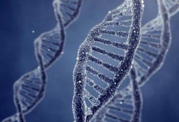 Fragmentierung von Spermien-DNA