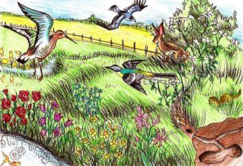 Ecosistema. ecosistema struttura concetto e tipi