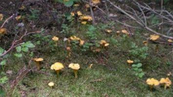 Co jadalne grzyby? Co jadalne grzyby zbierane na jesieni?