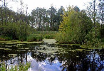 paraíso de vacaciones. lagos Shatsky