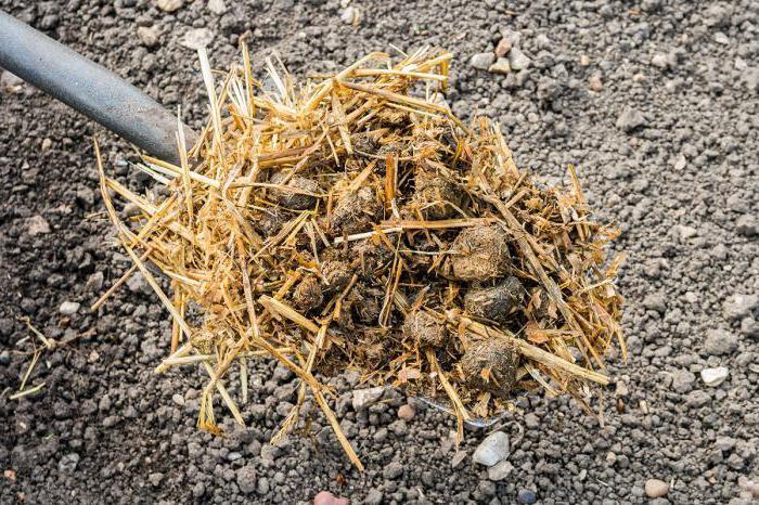 Comment utiliser le fumier de caille conseils et fonctionnalit s - Comment utiliser le purin d ortie ...