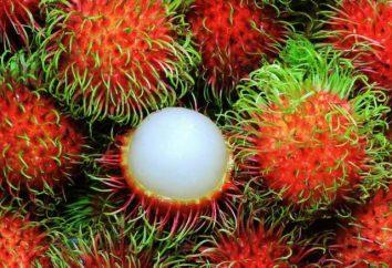 Co jest Rambutan? Opis, właściwości