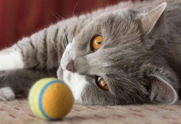 Si los ojos del gatito fester