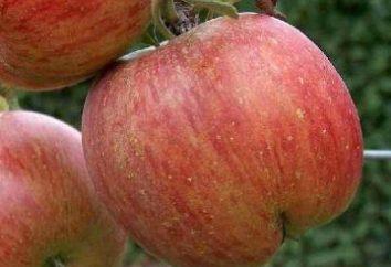 Plantar árvores de maçã no outono: Dicas jardineiros