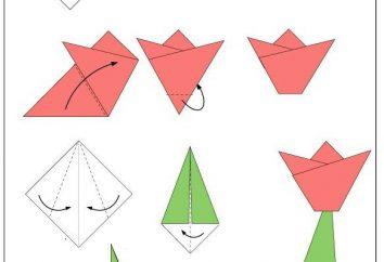Origami pour les enfants 4-5 ans: programmes et idées