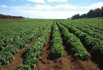 Kartoffelmotte: Kontrollmaßnahmen für die Lagerung von Volksmittel und Medikamente (Foto)