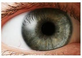 Iris. Caratteristiche della struttura dell'occhio umano