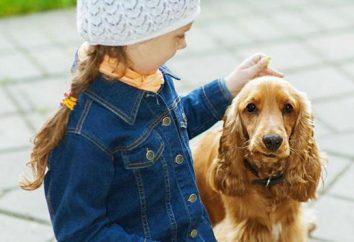 Meilleurs livres sur les chiens: critiques et commentaires