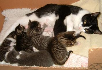 Dlaczego koty depczą nasze nogi? Powrót do dzieciństwa