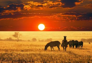 Wildlife d'Africa, le sue caratteristiche e la descrizione