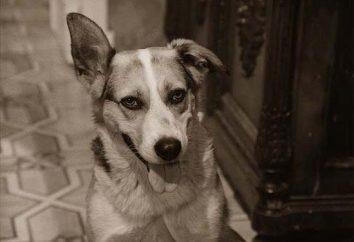 """MA Bulgakov """"Corazón de perro"""": un ensayo sobre el producto"""