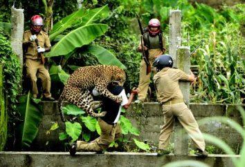 animais perigosos. O ataque às pessoas – agressão intencional ou auto-defesa?