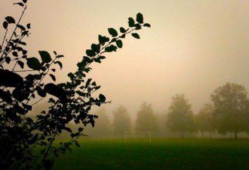 O nevoeiro sonho: Sonho Livro