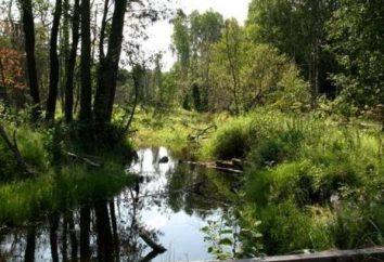 """Rezerwy regionu Penza. State Natural Reserve """"Wołga step"""""""