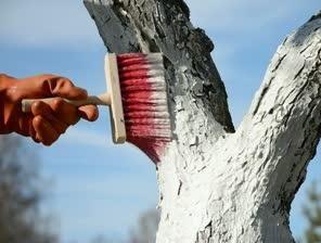 Usprawiedliwianie drzew jesienią: dlaczego i jak to zrobić